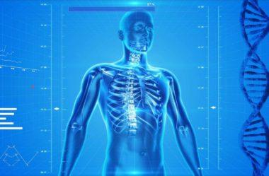 Anatomia humana: seis cursos para estudar na faculdade