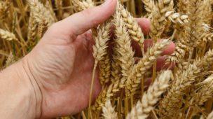 diferença entre engenharia agronômica e agronomia