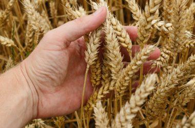 Qual a diferença entre engenharia agronômica e agronomia?